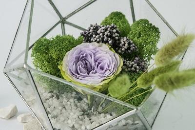 Флораріуми і стабілізовані квіти