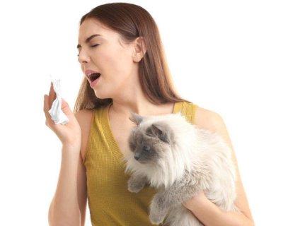 5 ознак того, що у вас алергія на кішку