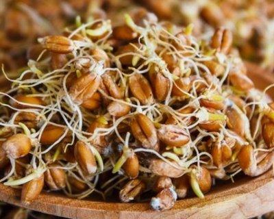 Для чого і як вживати пророщену пшеницю